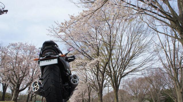 桜VMAX